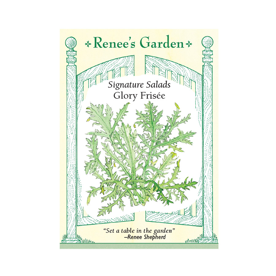Glory Frisee Curly Endive Seeds
