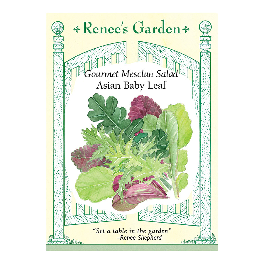 Asian Baby Leaf Gourmet Mesclun Salad Seeds