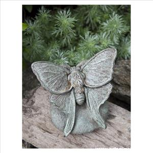 Lunar Moth on Rock
