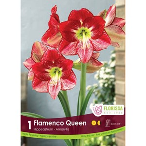 Bulb_Amaryllis_Flamenco_Queen.jpg