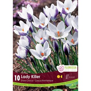 Bulb_Crocus_Lady_Killer.jpg