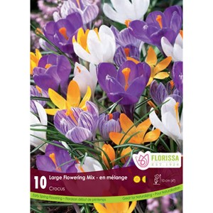 Bulb_Crocus_Lg_Flowering_Mix.jpg