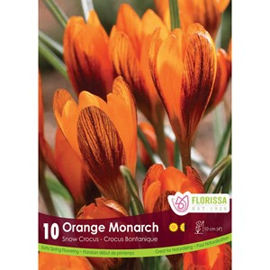 Bulb_Crocus_Orange_Monarch.jpg