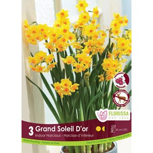Bulb_Narcissus_Grand_Soleil_D'Or.jpg