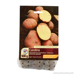 Carolina_SeedPotato.jpg