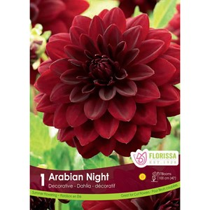 Dahlia_Arabian_Night.jpg