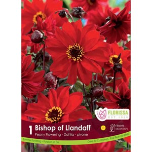 Dahlia_Bishop_of_Llandaff.jpg