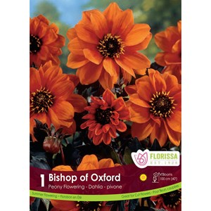 Dahlia_Bishop_of_Oxford.jpg