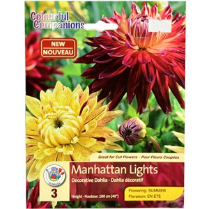 Dahlia_ManhattanLights.jpg