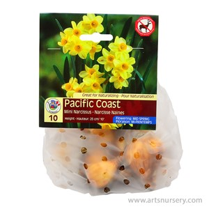 Narcissus_PacificCoast.jpg