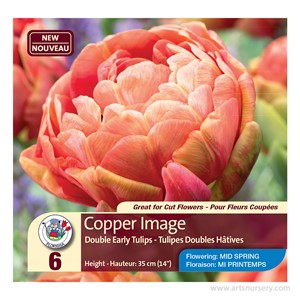 tulip_copperimage.jpg