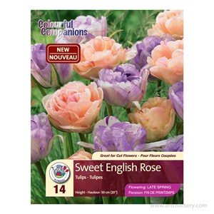 tulip_sweetenglishrose.jpg
