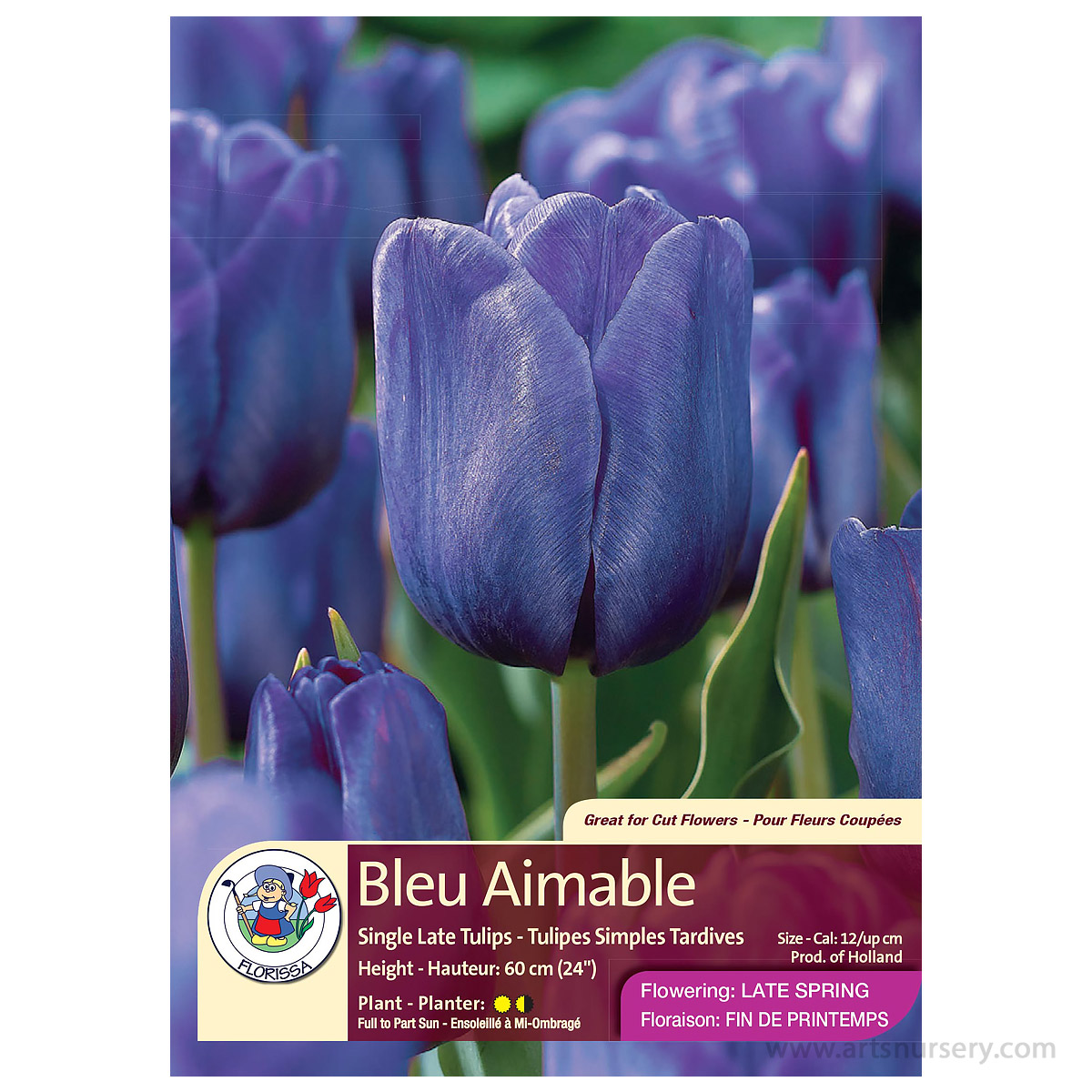 'Bleu Aimable' Tulip Bulbs
