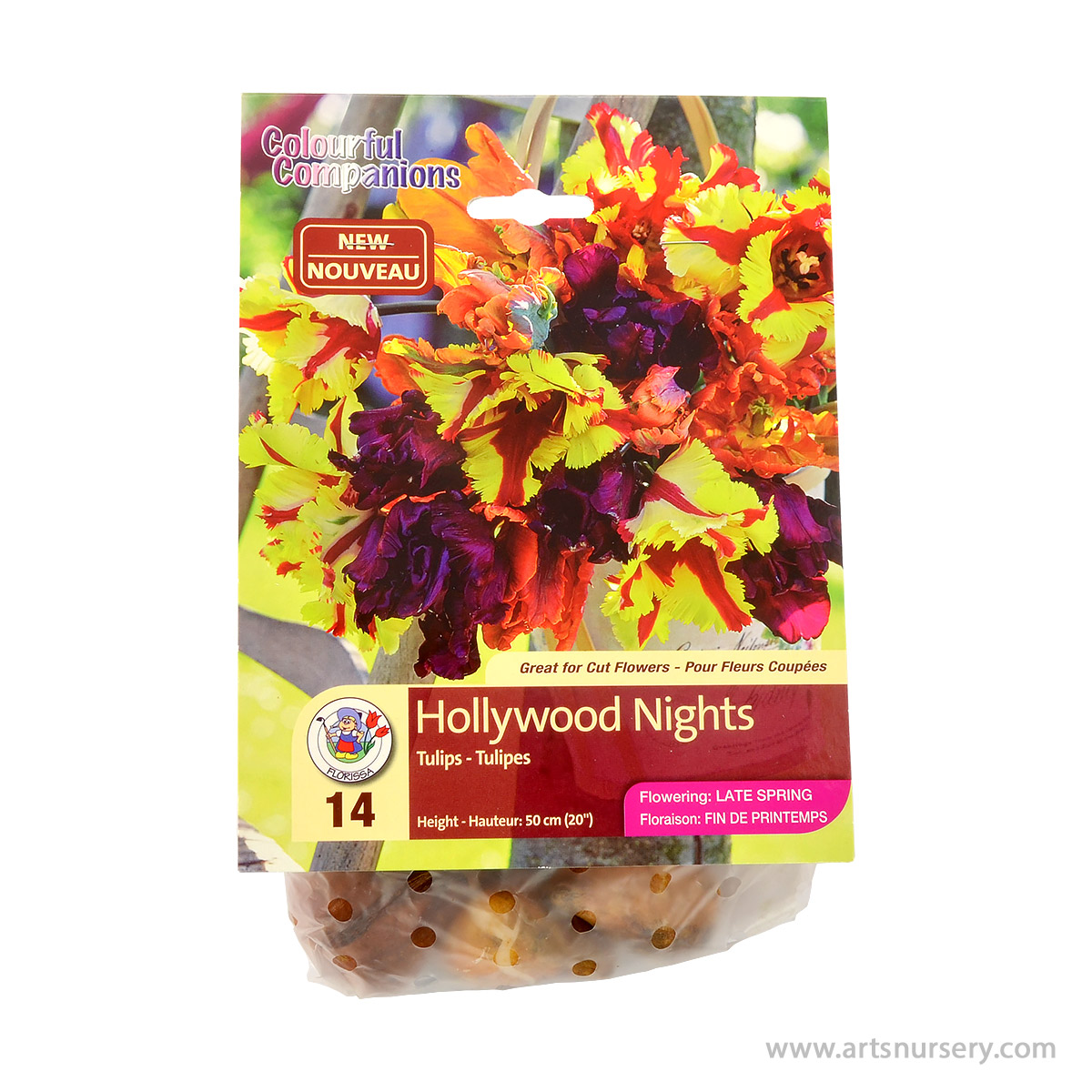 Colourful Companions Tulipa 'Hollywood Nights' Bulbs