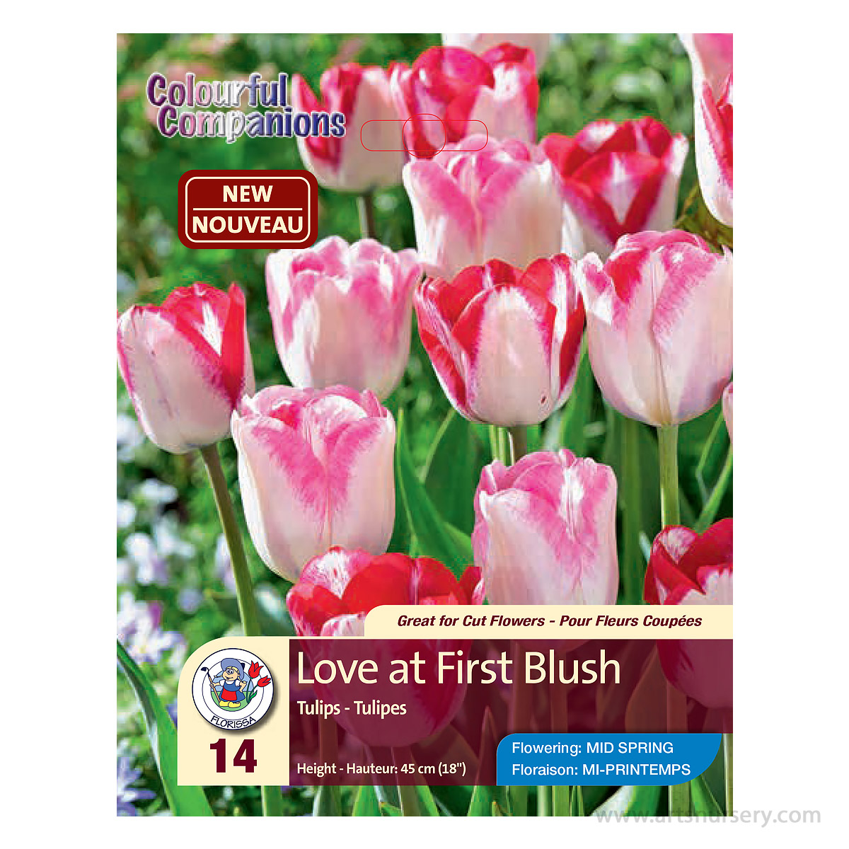 Colourful Companions Tulipa 'Love of First Blush' Bulbs