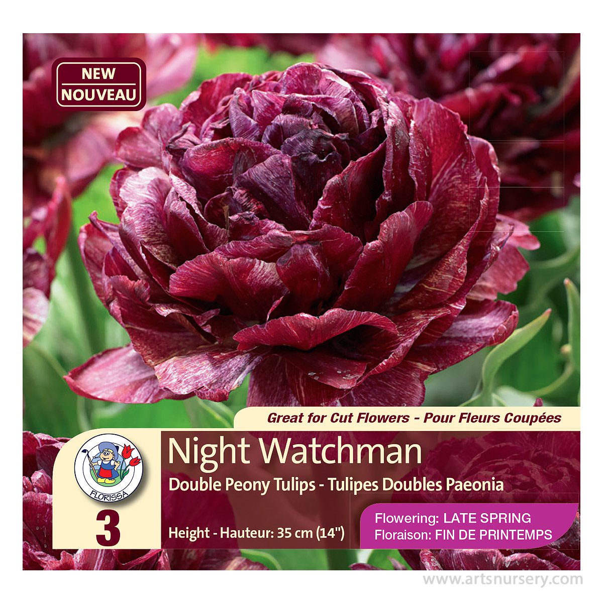 Colourful Companions Tulipa 'Night Watchman' Bulbs