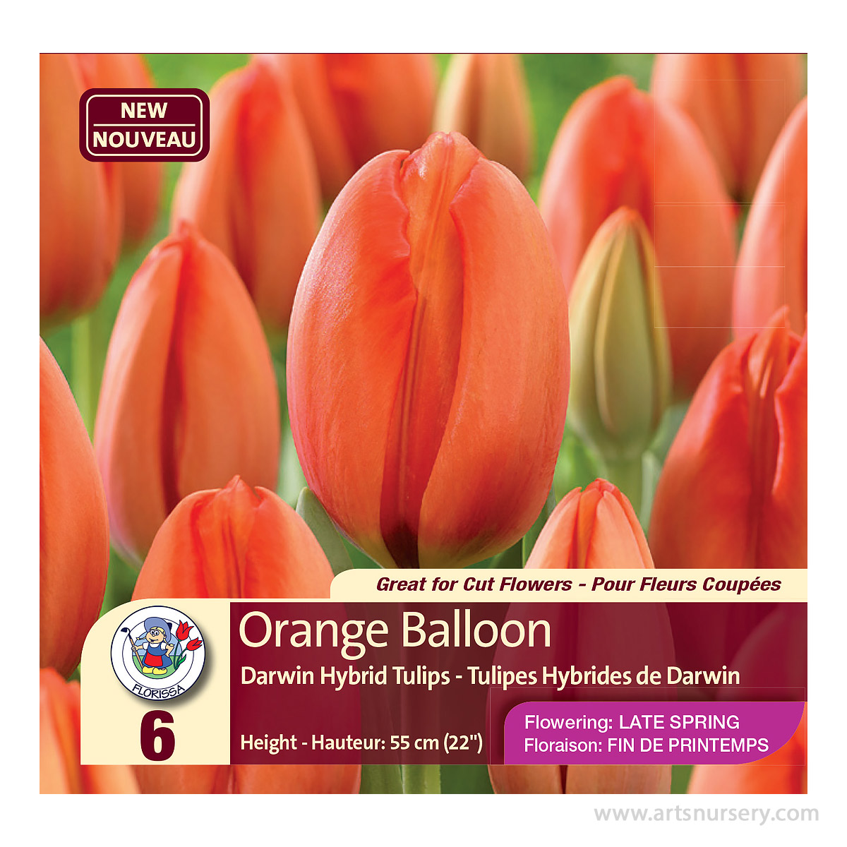 Tulip Darwin Hybrid  'Orange Balloon' Bulbs