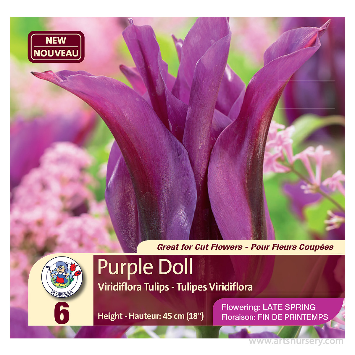 Tulip 'Purple Doll' (Viridiflora) Bulbs