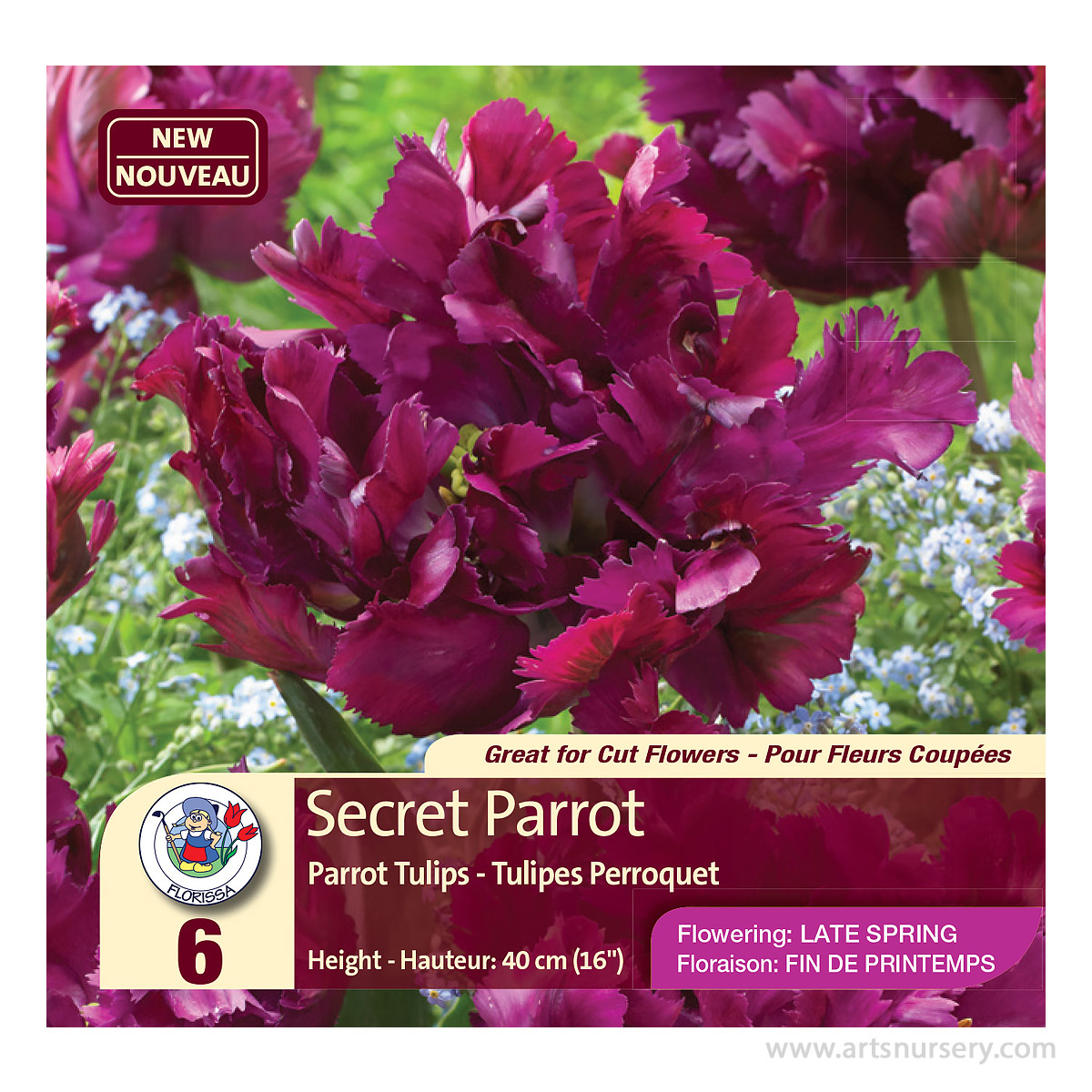 Tulip 'Secret Parrot' Bulbs