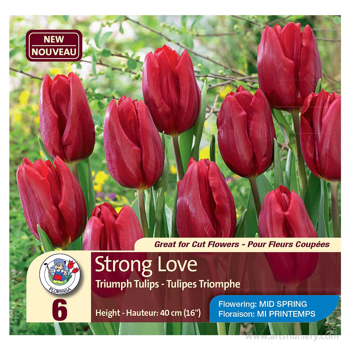 Tulipa 'Strong Love' Bulbs