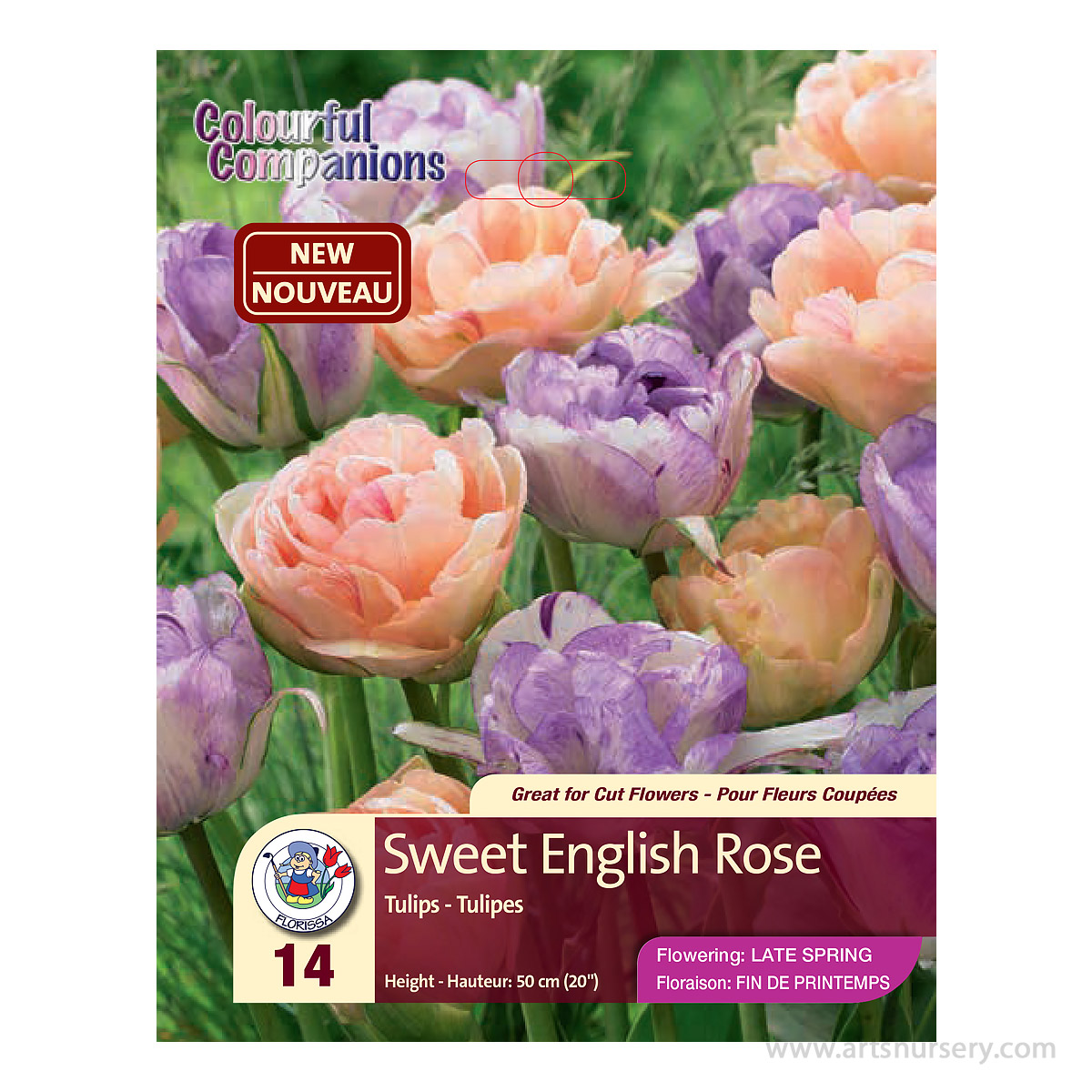 Colourful Companion 'Sweet English Rose' Double Peony Tulip