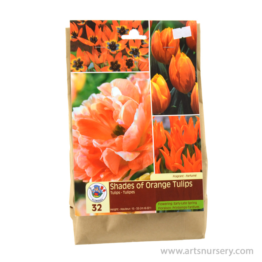 Tulipa 'Shades of Orange' Bulb Kit