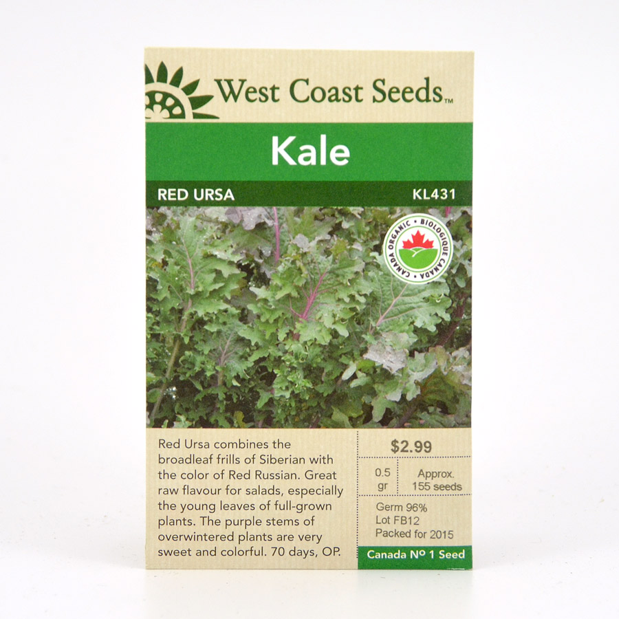 Red Ursa Kale Seeds