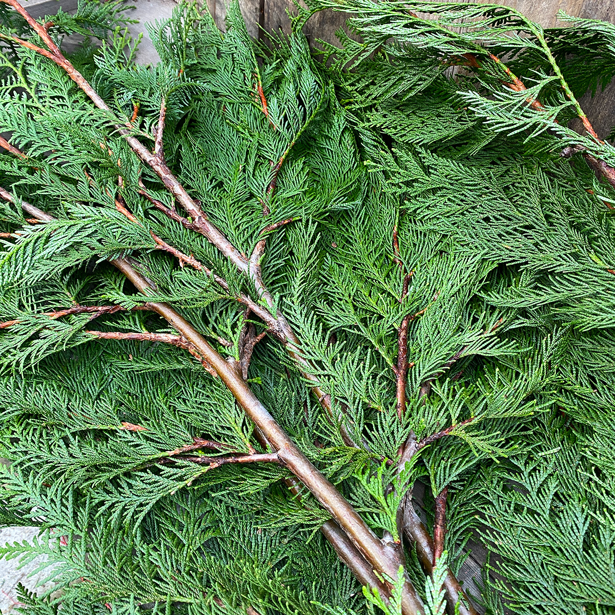 Christmas Greens - Western Red Cedar Boughs