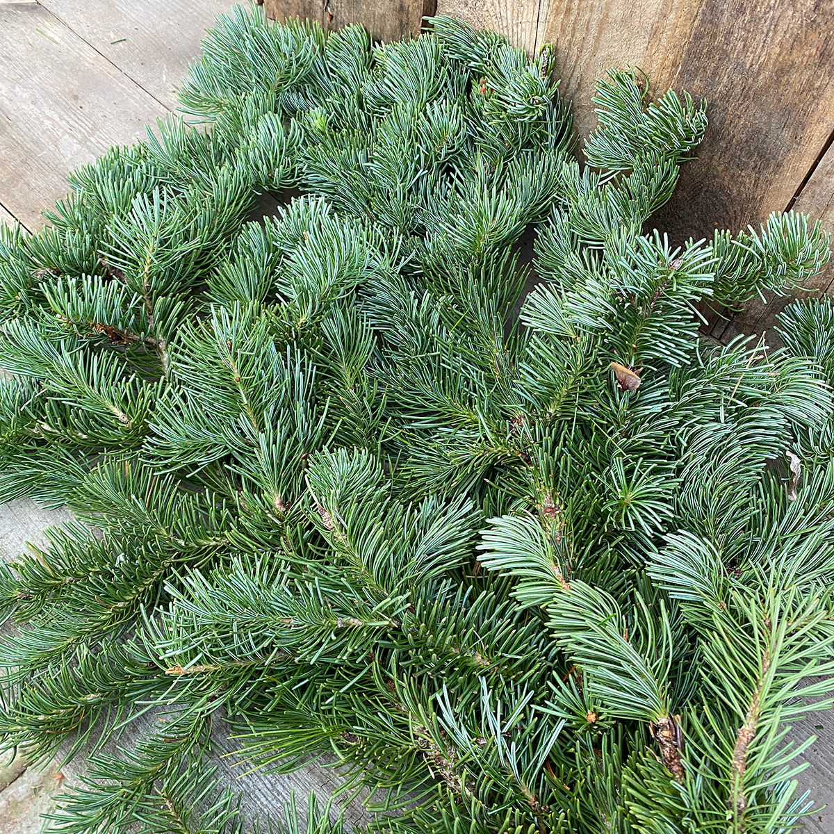 Christmas Greens - Noble Fir Boughs